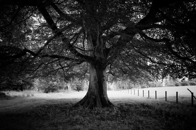 Carnell Estate, Scotland. 15.08.2016 Leica M9; 21mm Zeiss Biogon